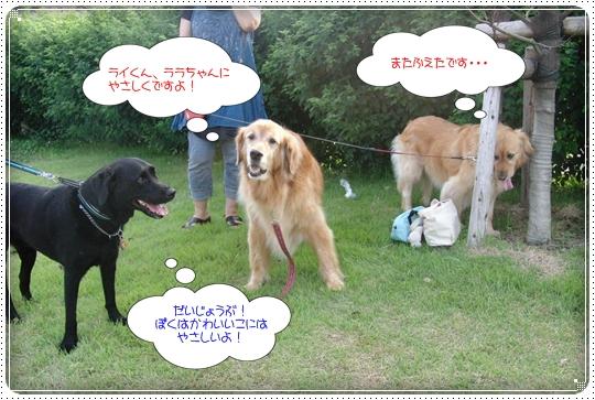 2010,7,10お散歩9
