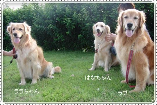 2010,7,10お散歩8