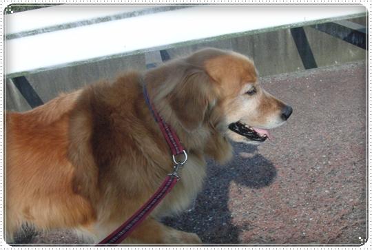 2010,7,10お散歩2