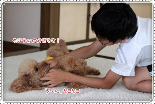 2010,7,11しつけ教室6