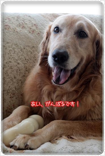 2010,7,11ほねほね3