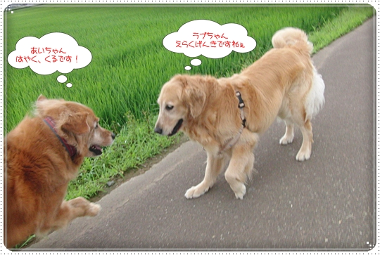 2010,7,12お散歩6