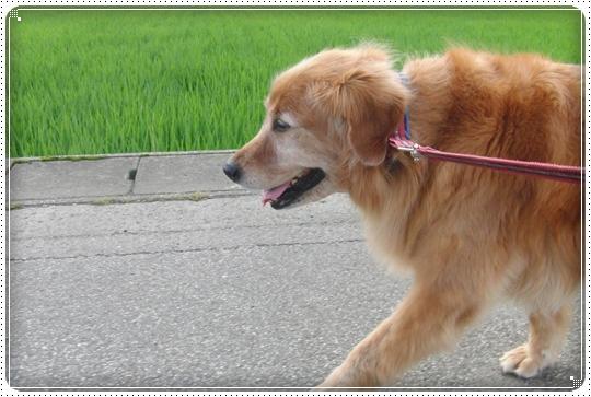 2010,7,12お散歩2