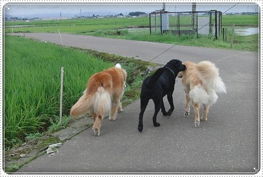 2010,7,12お散歩10