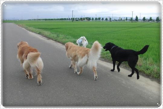 2010,7,12お散歩9