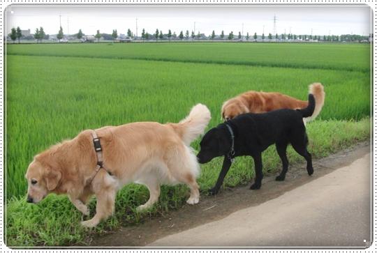 2010,7,12お散歩8