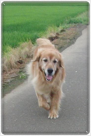 2010,7,12お散歩7