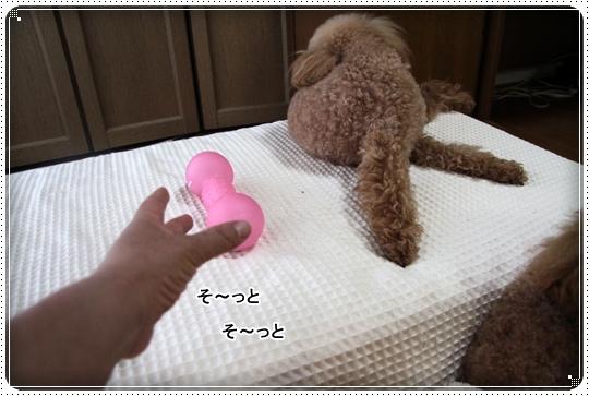 2010,7,13おもちゃ7