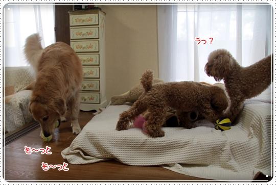 2010,7,13おもちゃ20