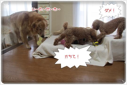 2010,7,13おもちゃ19