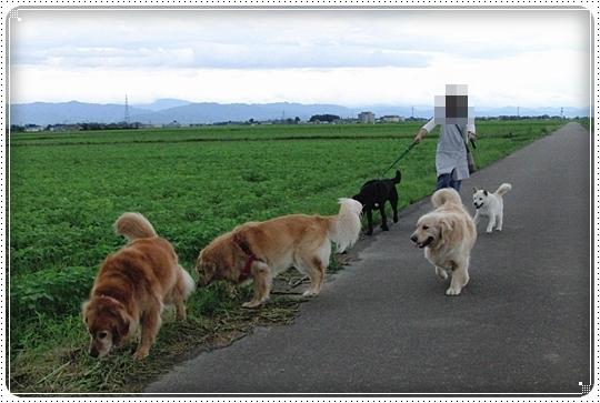 2010,7,14お散歩8
