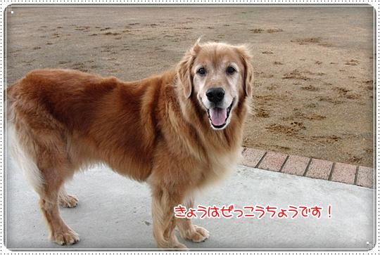 2010,7,14お散歩6