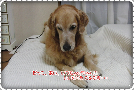 2010,7,15お散歩8