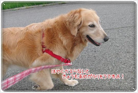 2010,7,15お散歩2
