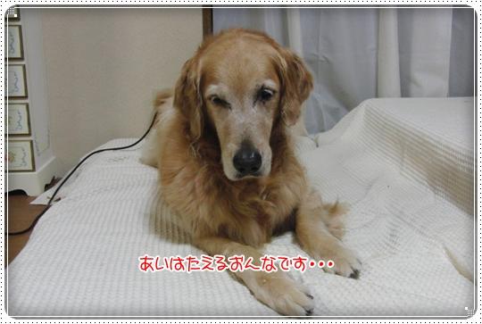 2010,7,15お散歩10
