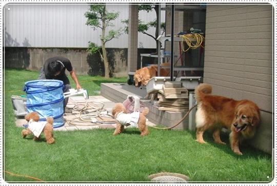 2010,7,16お散歩6
