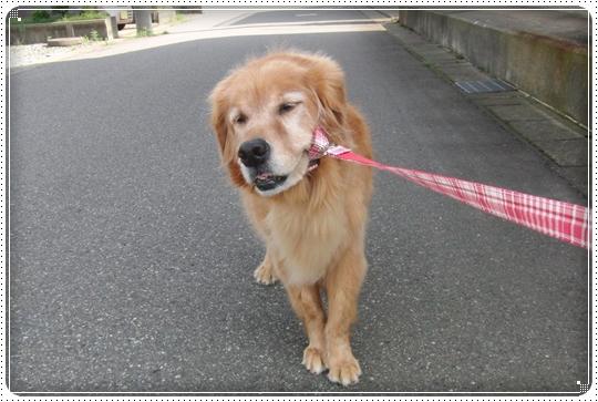 2010,7,16お散歩2