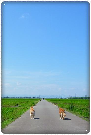 2010,7,17お散歩6