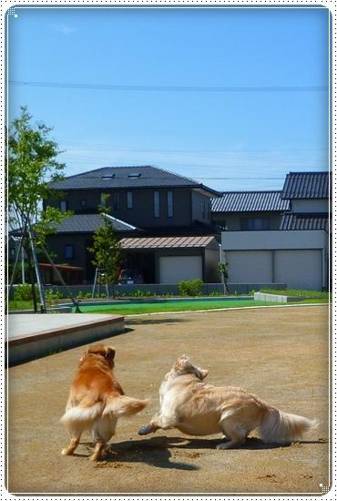 2010,7,17お散歩4