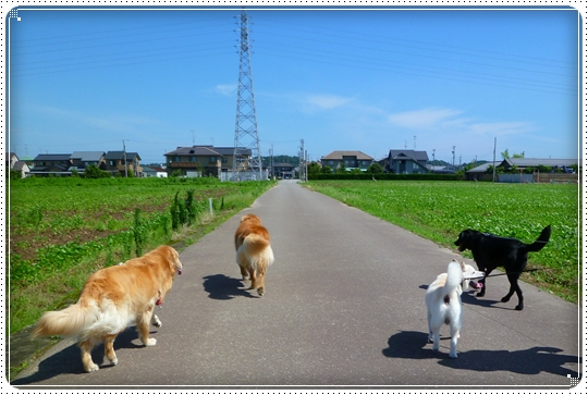 2010,7,17お散歩7
