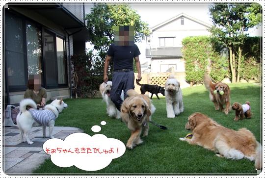2010,7,19お庭遊び15