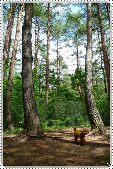 2010,7,20まきばの森2