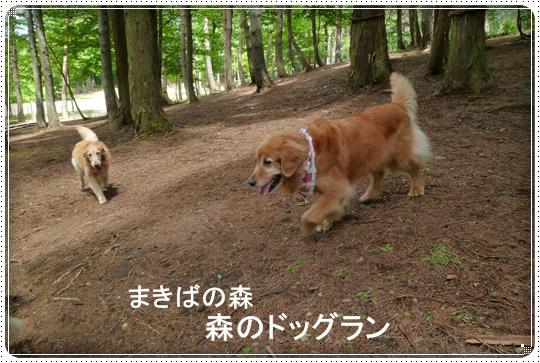 2010,7,20まきばの森1
