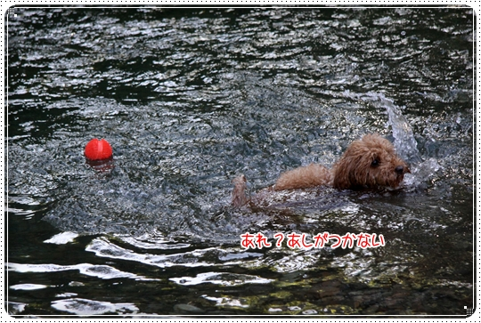 2010,7,21川遊び5