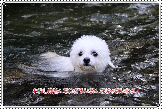 2010,7,21川遊び11