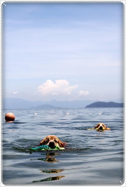 2010,7,22琵琶湖1