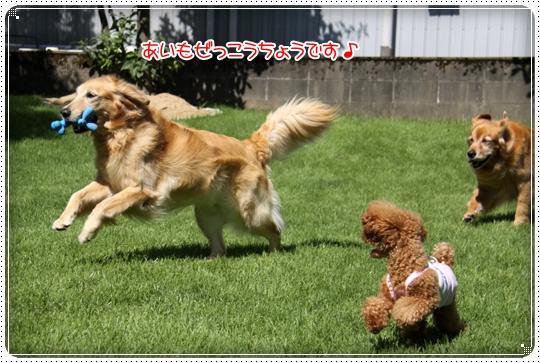 2010,7,24お庭遊び3