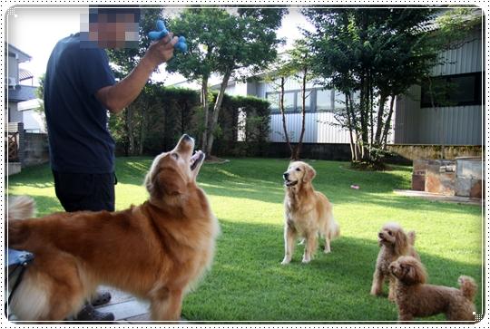 2010,7,28お庭遊び1