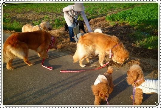 2010,7,29お散歩5