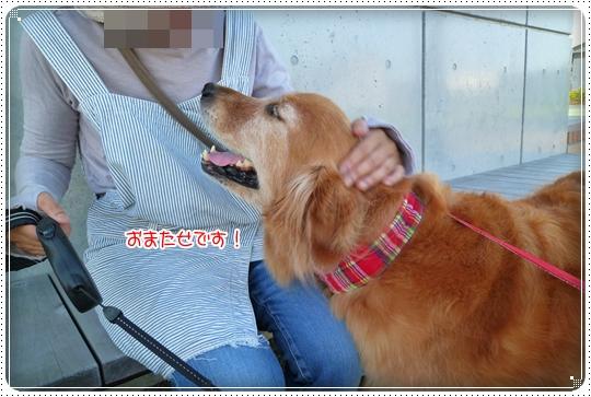 2010,7,29お散歩4