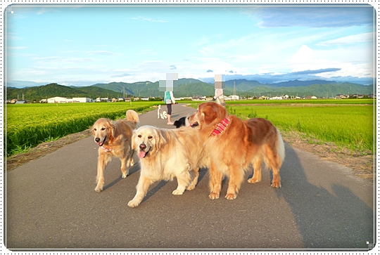 2010,7,29お散歩9