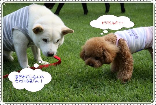 2010,7,30お庭遊び12