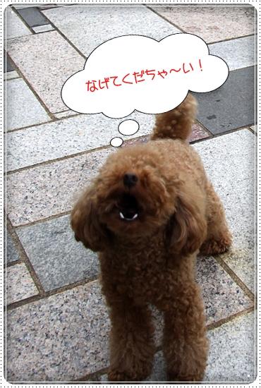 2010,7,31お庭遊び4