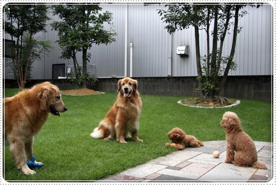 2010,7,31お庭遊び9