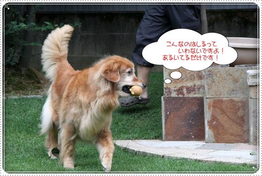 2010,8,2 お庭遊び4