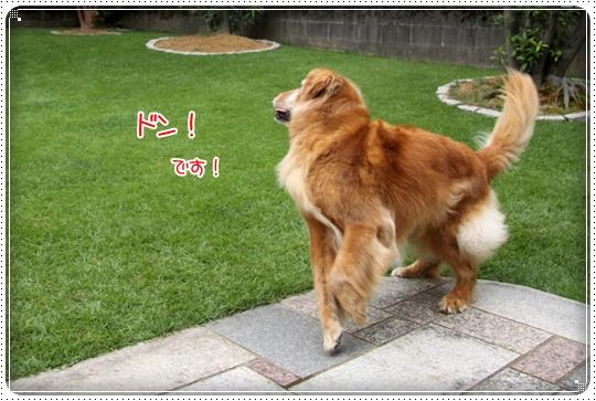 2010,8,2 お庭遊び9