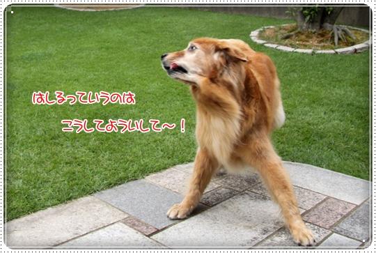 2010,8,2 お庭遊び8