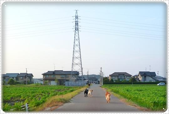 2010,8,2 お庭遊び13