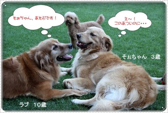 2010,8,5お庭遊び6