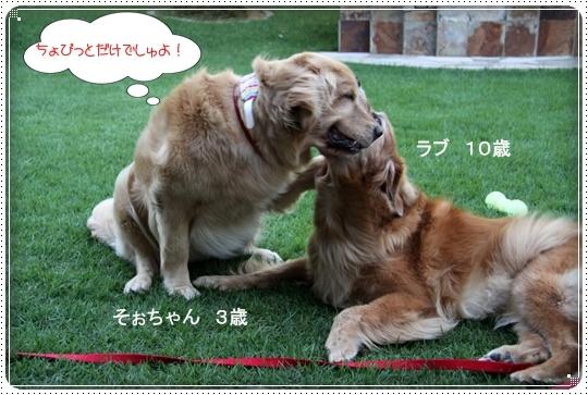 2010,8,5お庭遊び9