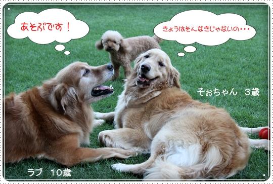 2010,8,5お庭遊び7