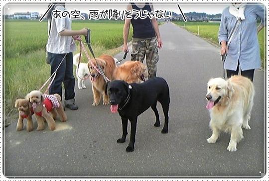 2010,8,6お庭遊び10