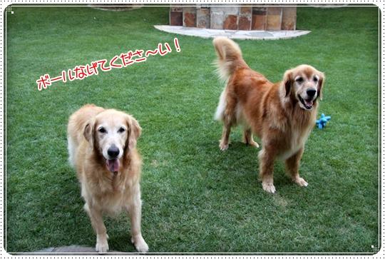 2010,8,7お庭遊び4