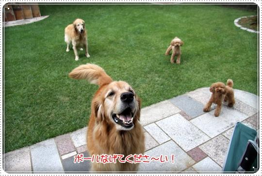 2010,8,10お庭遊び4
