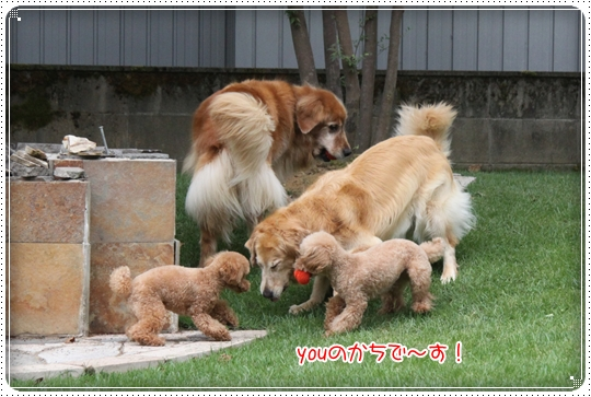 2010,8,10お庭遊び2
