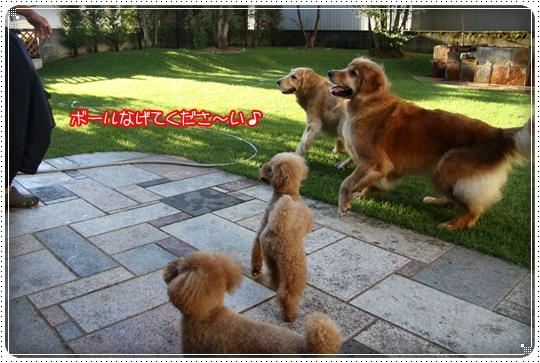 2010,8,11お庭遊び3